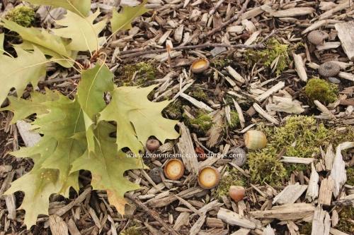 2013-09-04 01.05.36-2 brownies meet acorns